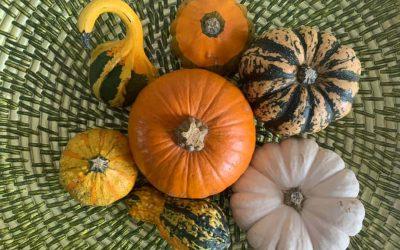 My 365 project: The Oct / Nov edit